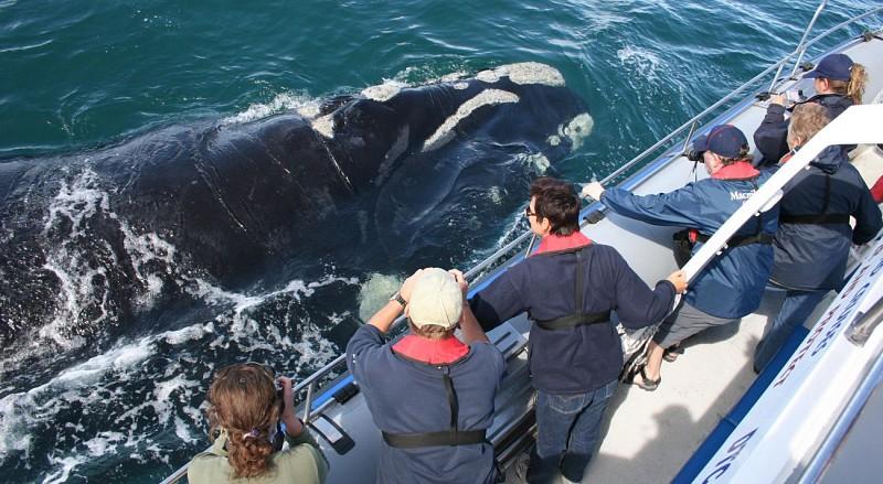 Croisière d'observation des baleines au large de Dyer Island - Au départ de Gansbaai (à 2h de Cape Town et 30 mn d'Hermanus)