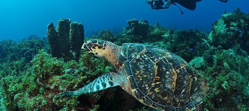 Plongée sous-marine en Martinique - Forfaits 1, 3, 6, 10 ou 15 sites - Au départ des Trois Îlets