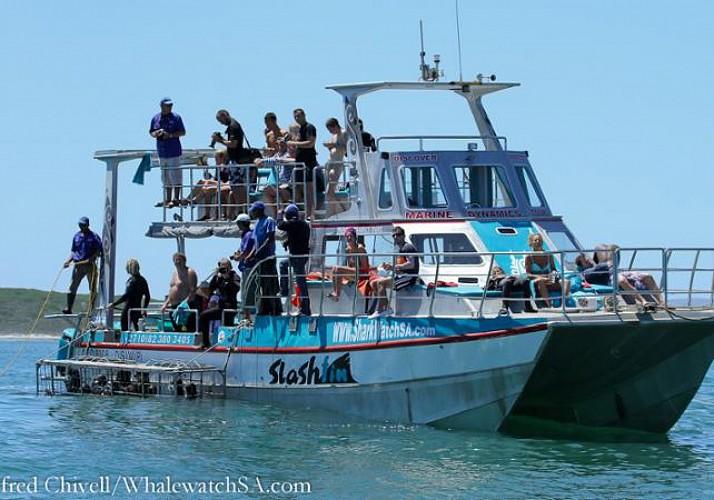 Plongée en cage avec le grand requin blanc - A Gansbaai (à 2h de Cape Town)