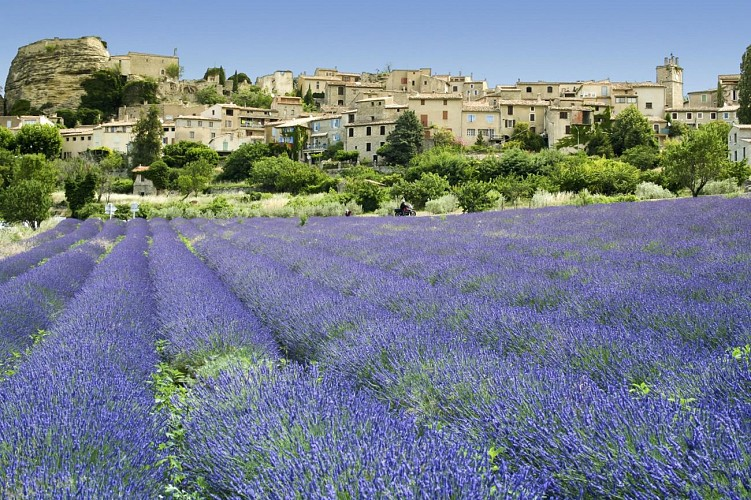Day trip to the Lavender Fields and the Verdon Gorges