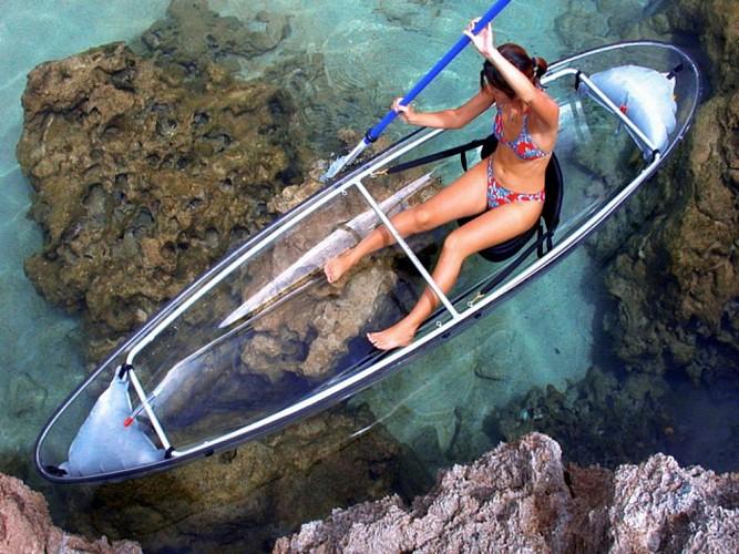 Explore the Mangroves: Cruise + Glass-bottomed kayaking session