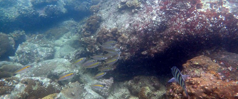 Explore the Sai Kung Coral Reefs