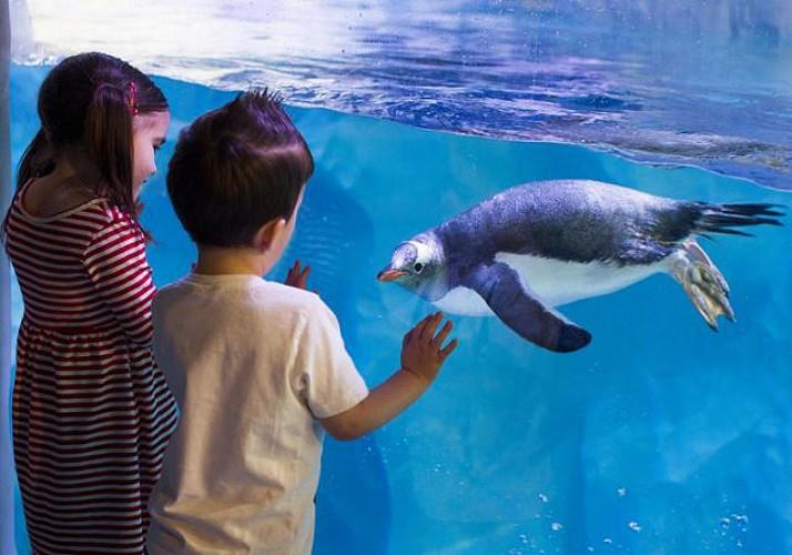 Skip-the-Line Tickets to London Aquarium Sea life