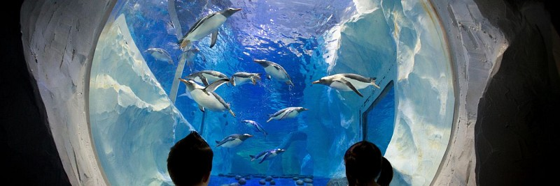 Billet coupe-file Aquarium Sea life - Londres