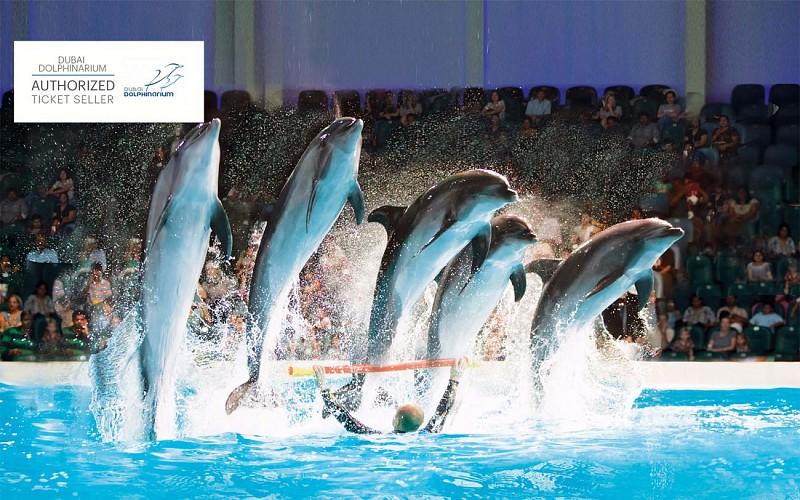 Dubai Dolphinarium: Dolphin & Seal Show