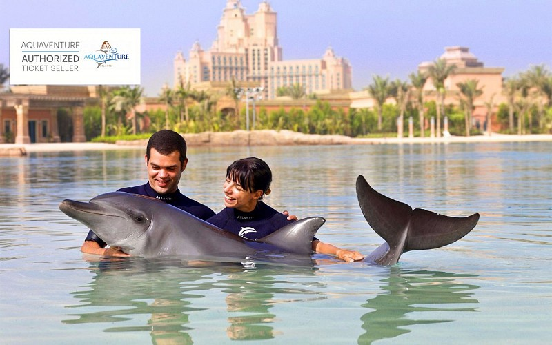 Royal Swim with Dolphins