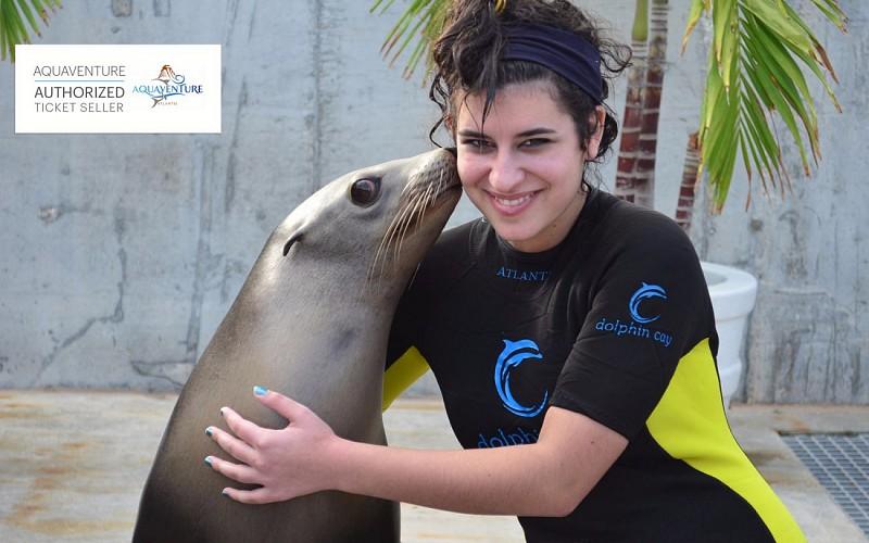 Sea Lion Discovery