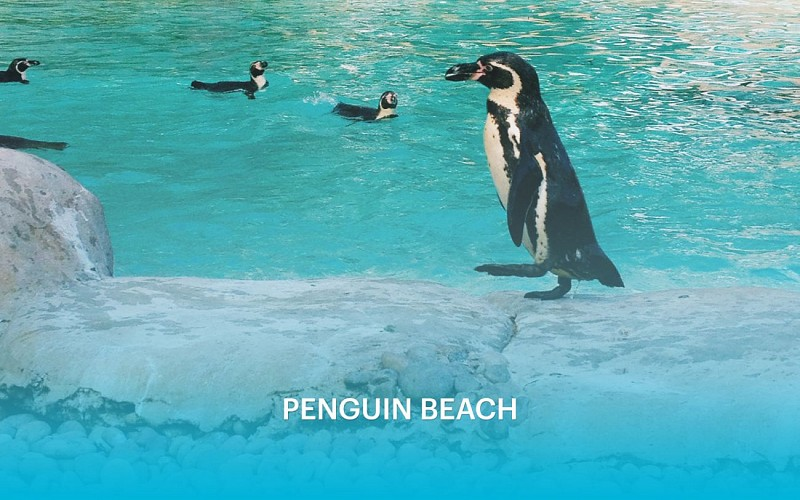 ZSL London Zoo: Admission Tickets