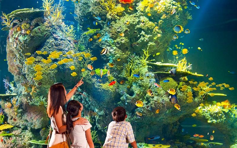 S.E.A Aquarium™ Tickets