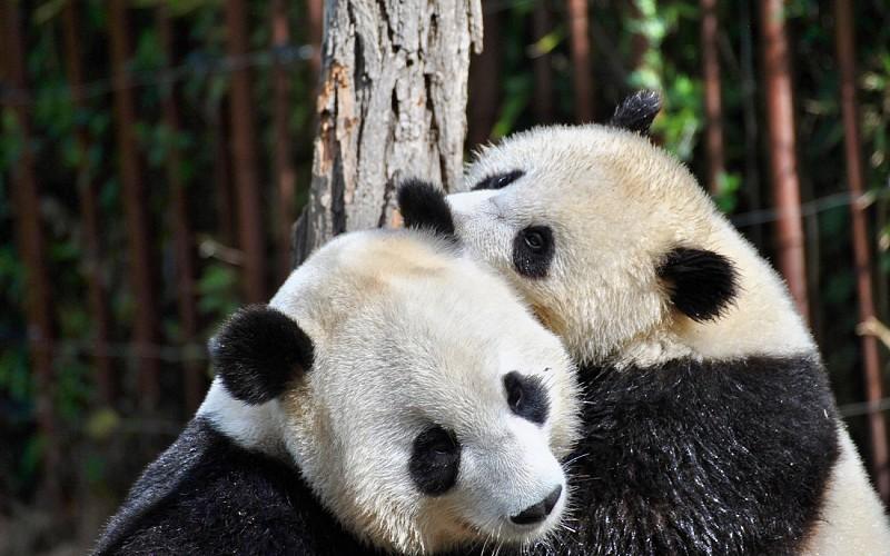 Super Saver Combo: Singapore Zoo + Night Safari