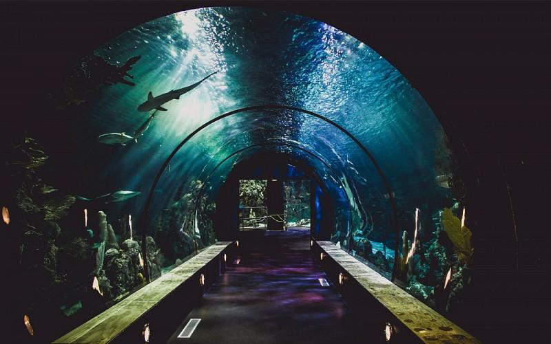 Ultimate Combo: Universal Studios Singapore + S.E.A. Aquarium™ + Adventure Cove Waterpark™