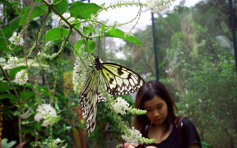 Super Saver Combo: Butterfly Park + Insect Kingdom