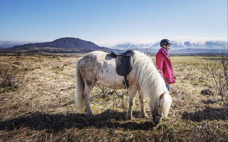 Meet the Horse