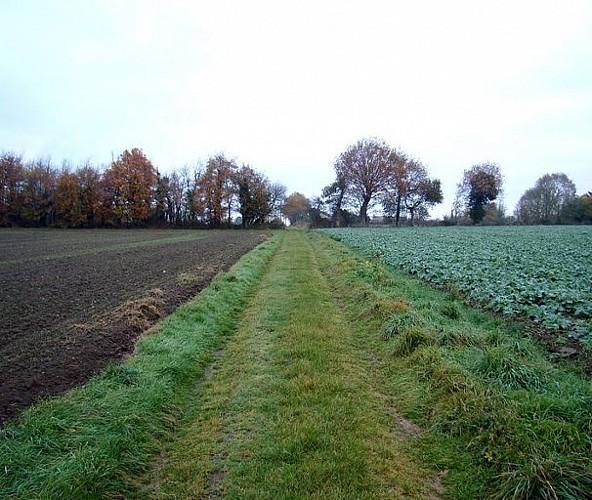 La Vieille Route (The Old Road)