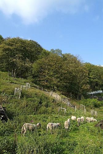 Hügel von Vivegnis