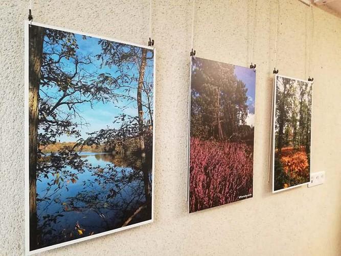 sologne-tourisme-musée-romorantin-musée de Sologne5
