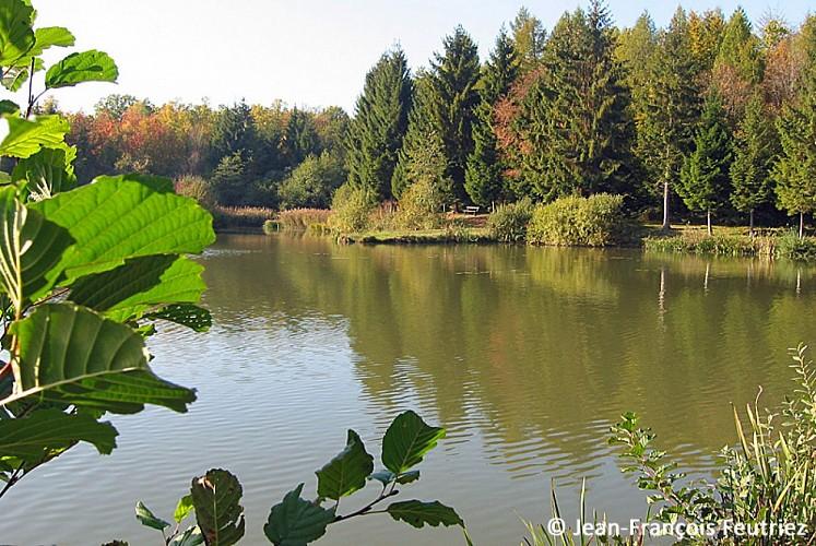 L'étang du Chenot