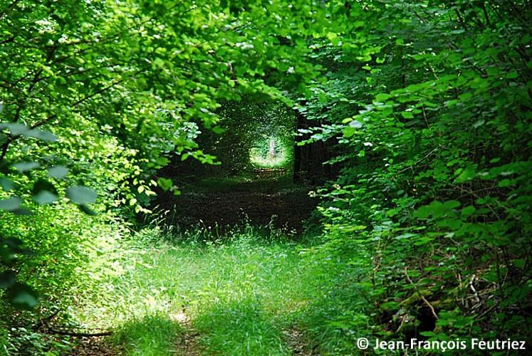 La Forêt Domaniale d'Auberive