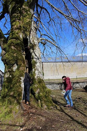 La Promenade des murs