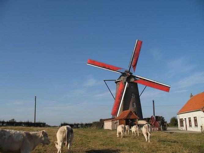 Steenmeulen et Musée Rural Flamand