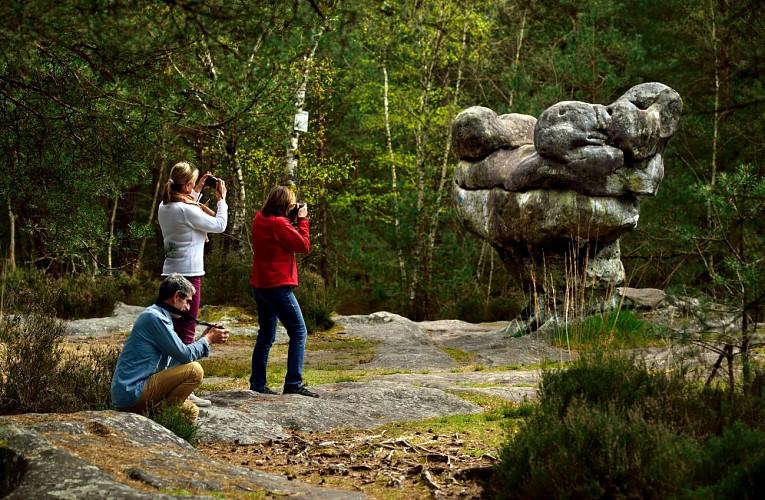 Forêt Domaniale de Fontainebleau