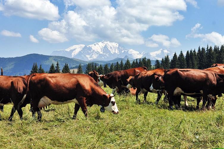 GAEC Lait Cow des Montagnes