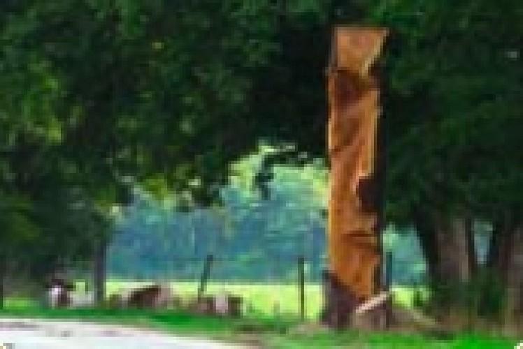 Juvaincourt - Sentier du menu bois
