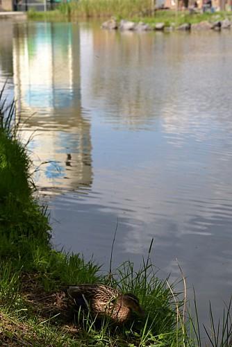 Château d'eau et l'étang Goffes