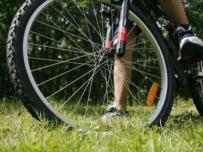 Bayi Cycles - Bicycle and electric bike hire
