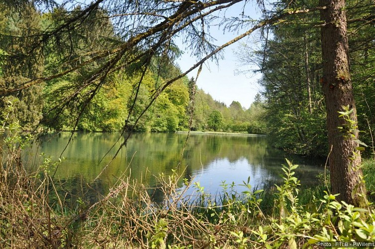 Les étangs de La Soye