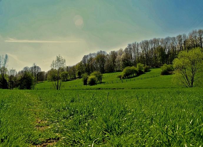 Les chemins à travers les champs