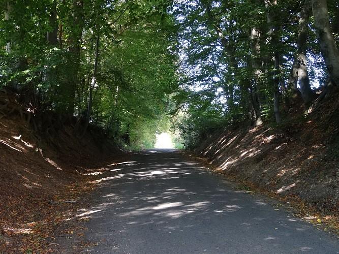Chemin creux composé de hêtres, charmes et chênes