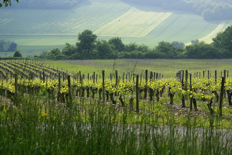 Vinitour -Laure Juvet - Crédit Laure (3)