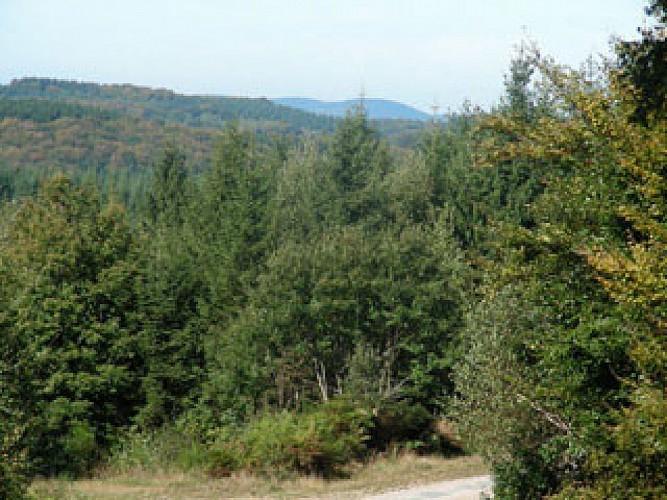 Forêt de Breuil-Chenue
