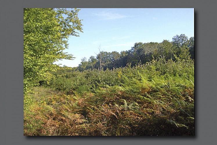 Forêt de Guérigny