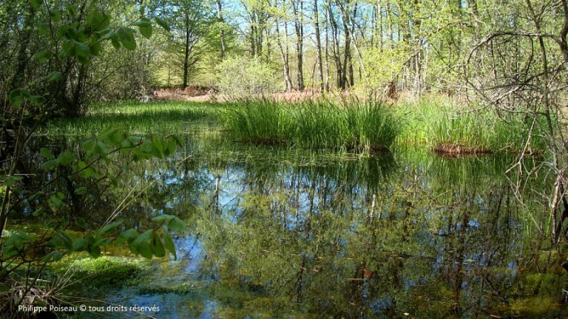 Forêt de Prémery
