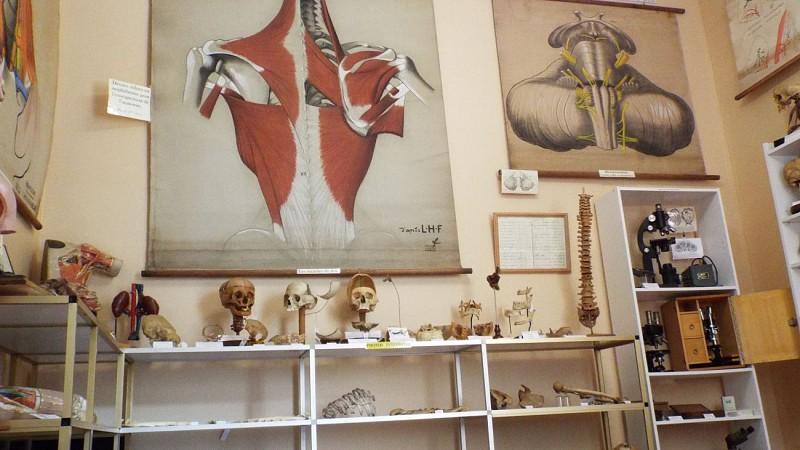 Musée de la Chirurgie