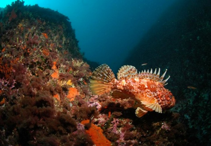Supervised or independent diver trainings