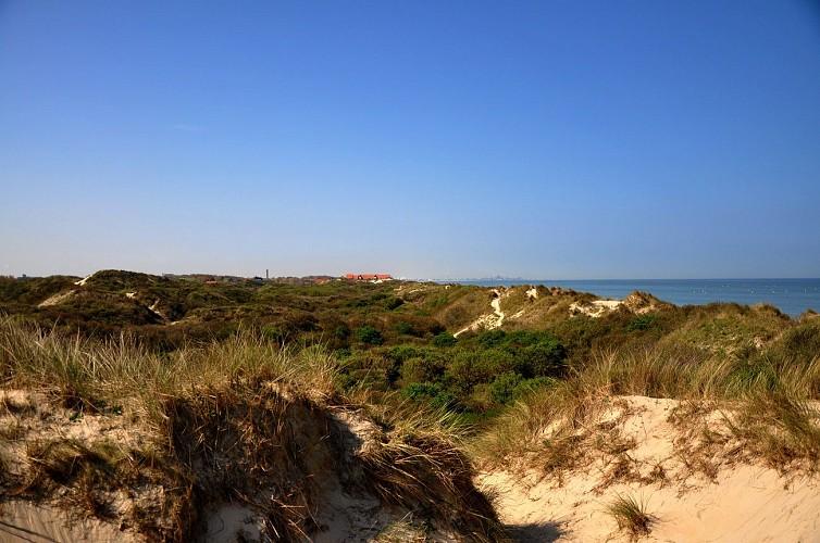 Bray-Dunes - Réserve Naturelle Dune Marchand