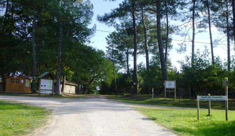 Forêt de Beupouyet