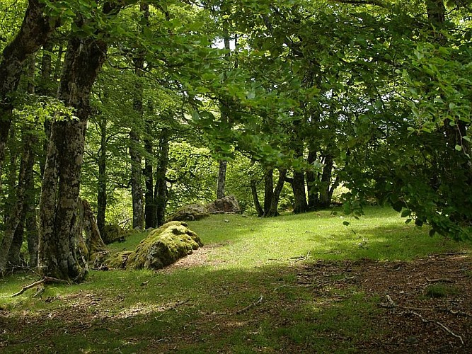 Forêt d'Iraty - Daniel Hargain - Mendive