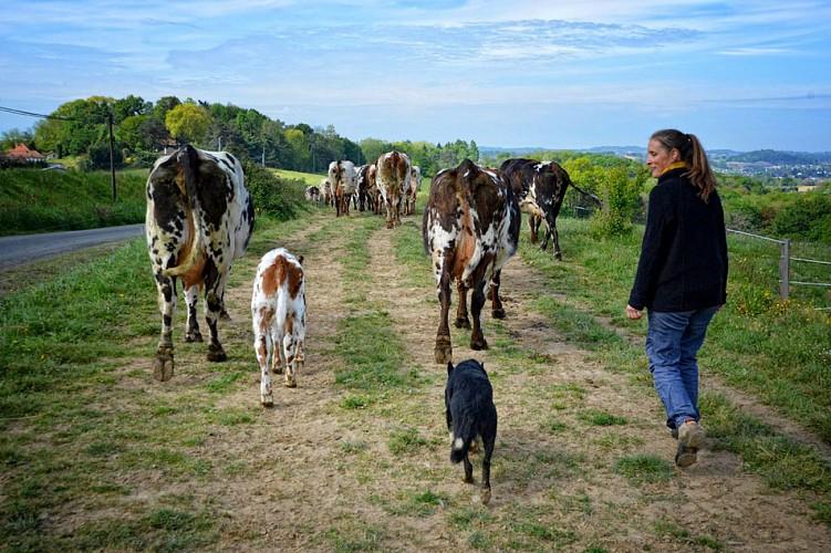 Lait-Ptits-Bearnais---degustation-fromage-gaston-febus.jpg