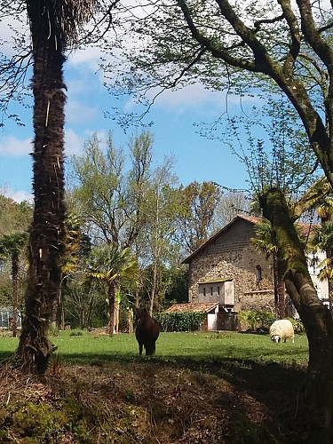 ChateauStMartin05-Pouillon-ChateauStMartin