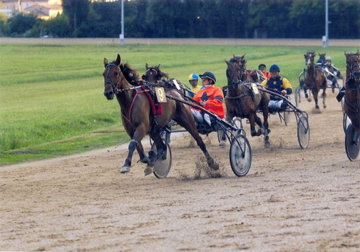 OT VILLEREAL - Courses hippiques - chevaux