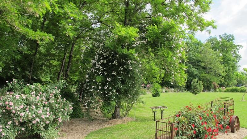 jardinpimpinellifolia_03