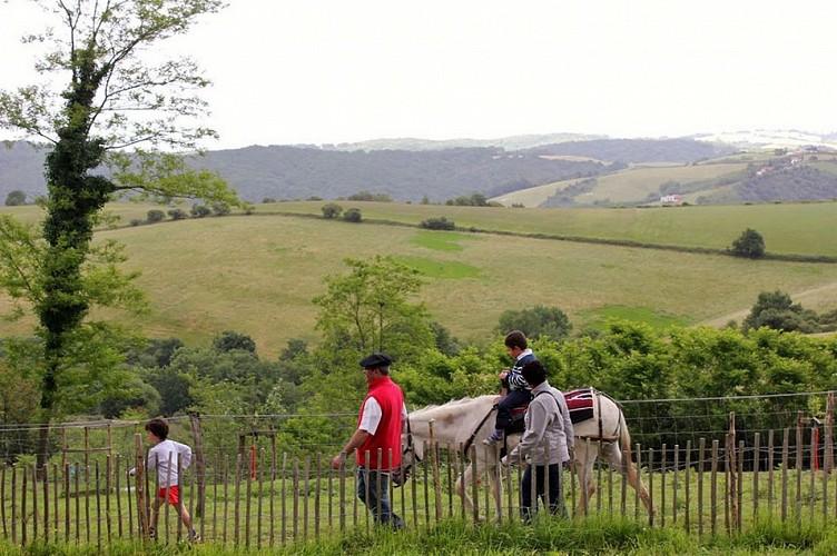Asinerie de Pierretoun-La Bastide Clairence (5)