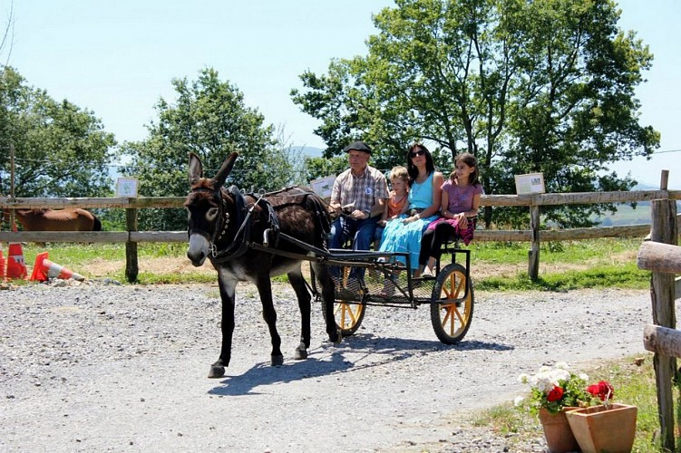 Asinerie de Pierretoun-La Bastide Clairence (6)