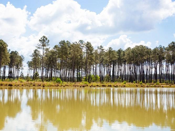 Captieux - lac de Taste (2)