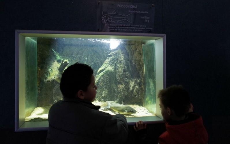 2-Maison-de-la-nature---Aquarium