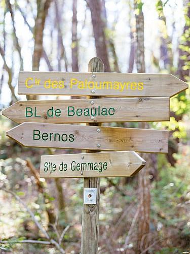Bernos-Beaulac - randonnée (1)